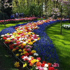 The Keukenhof Garden is going open again from 21-03-2019 to 19-05-2019